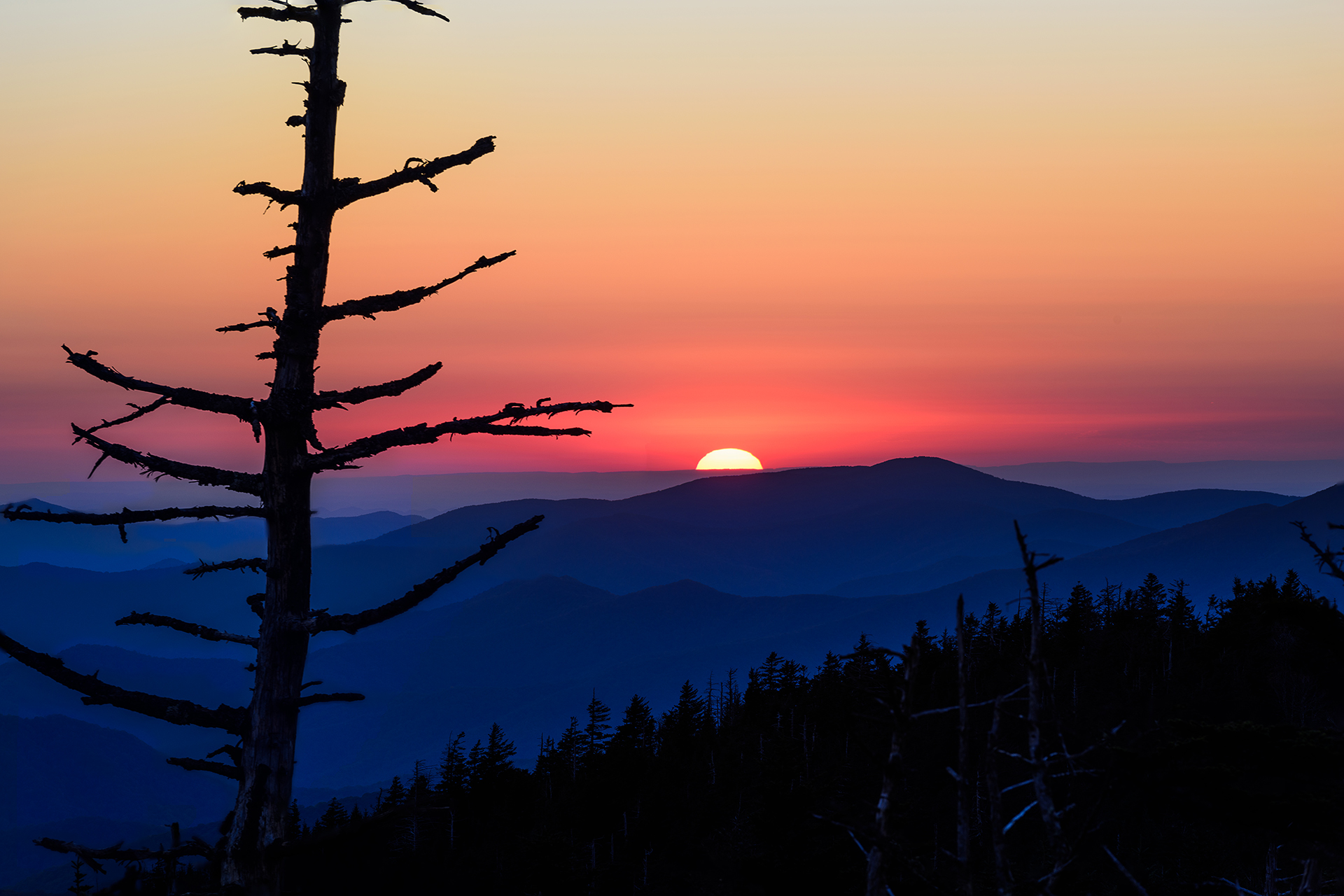 Sunset Tree Part 2 Clingman's Dome