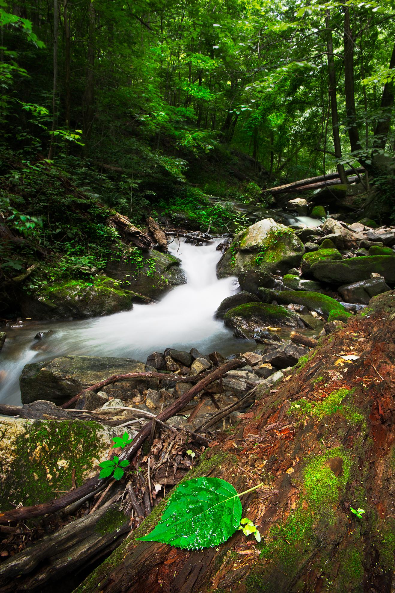 Amicalola Falls State Park Travel Noob