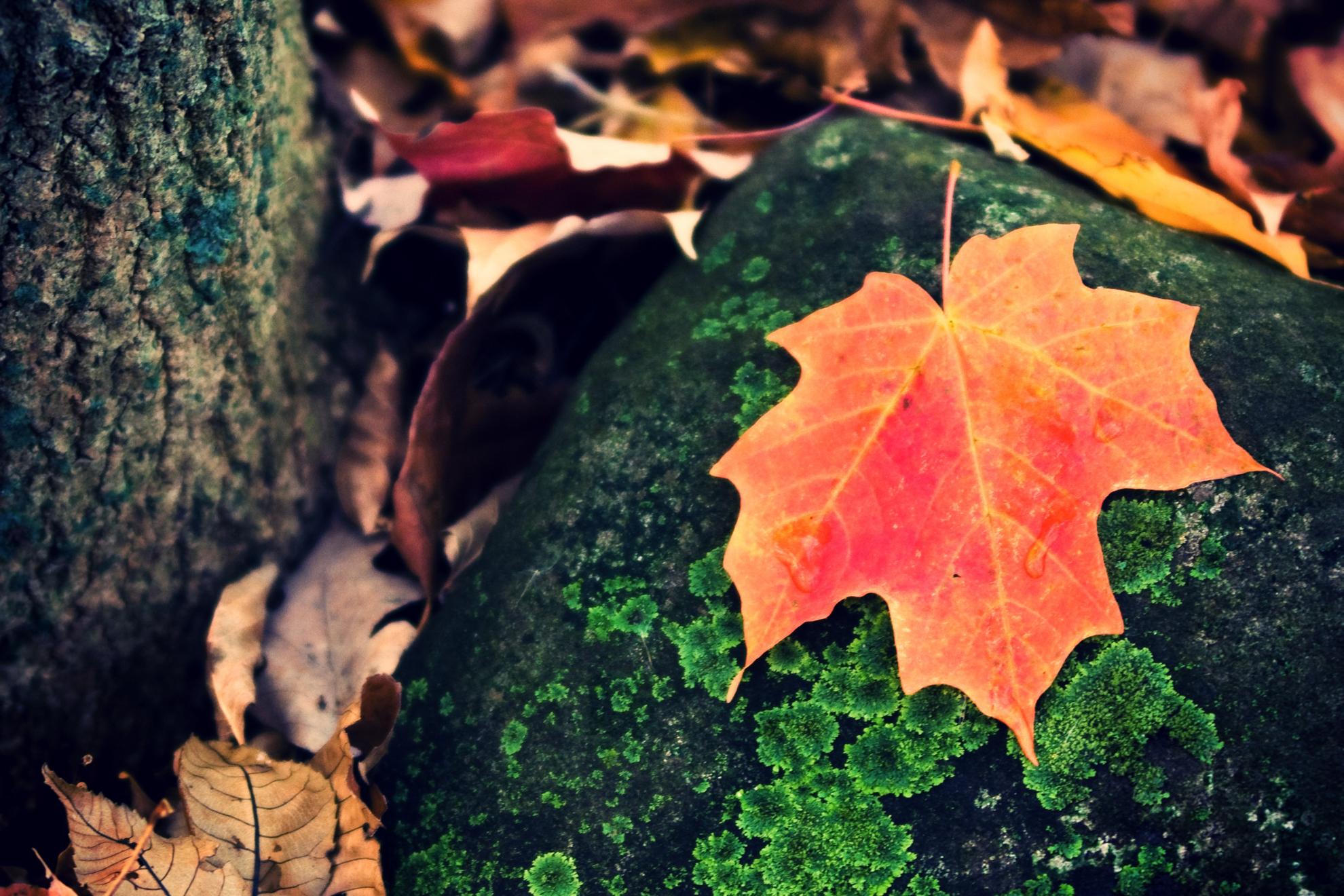 2010 Fall Color Analysis