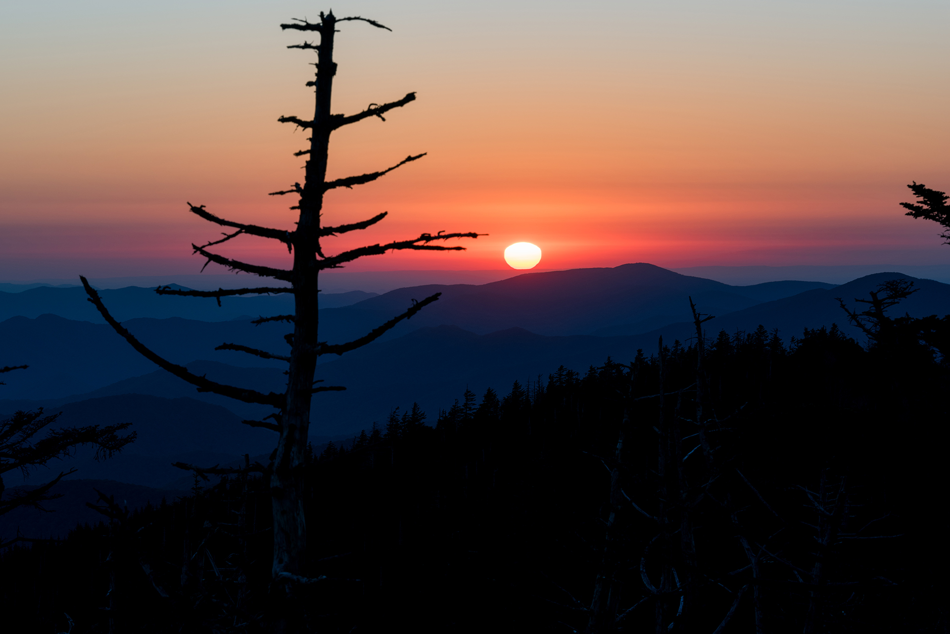 Sunset Tree at Clingman's Dome