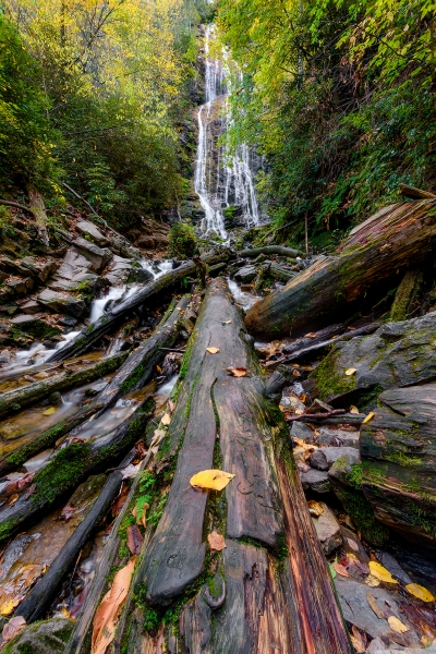 The Log of Mingo Falls